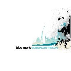 Blue Merle_Burning in the sun_amazon image_
