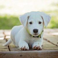 adorable puppy_sm